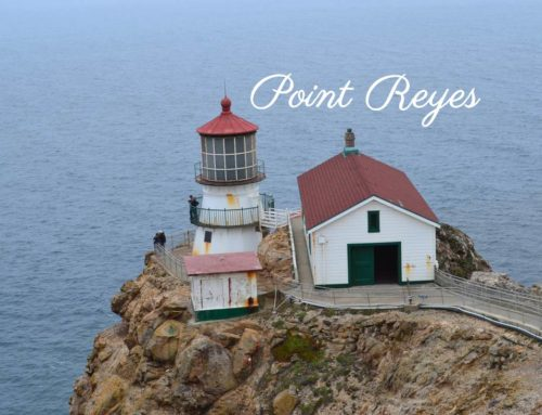 Point Reyes & Bolinas