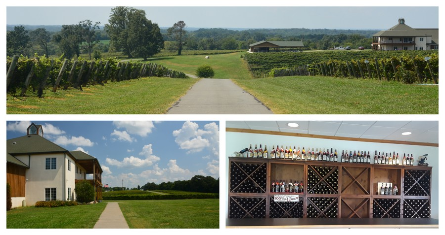 Visite du domaine de RayLen Vineyards & Winery