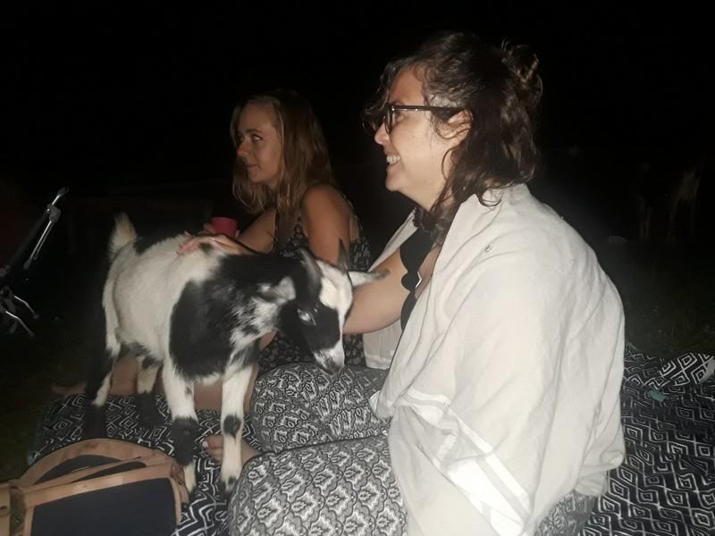 Cinéma avec les chèvres