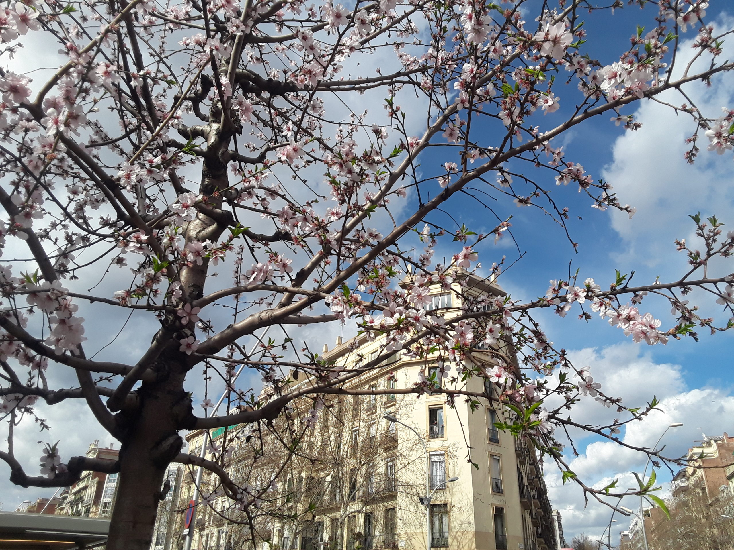 printemps barcelone