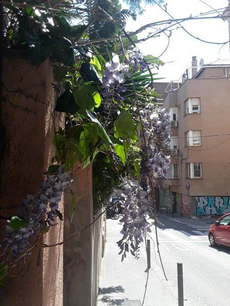 fleurs lesseps Barcelone