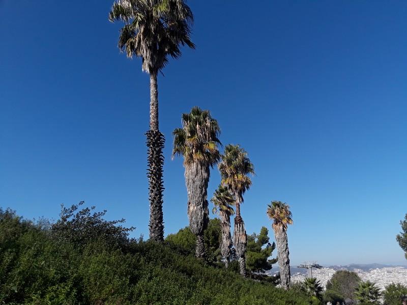 palmiers chateau Montjuic