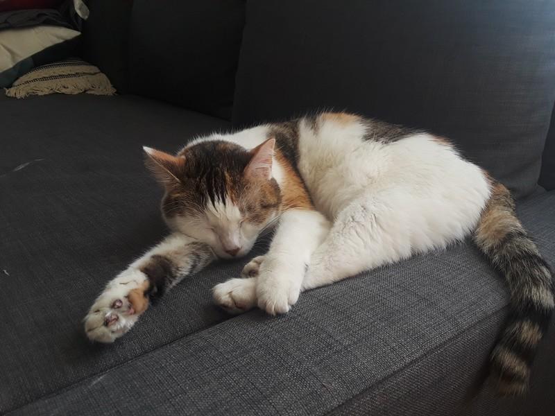 sieste chat