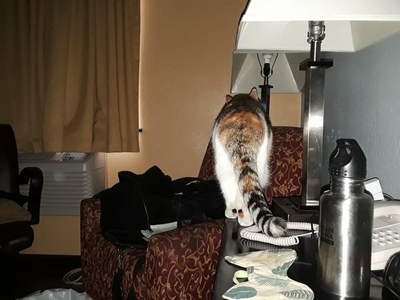 chat au motel
