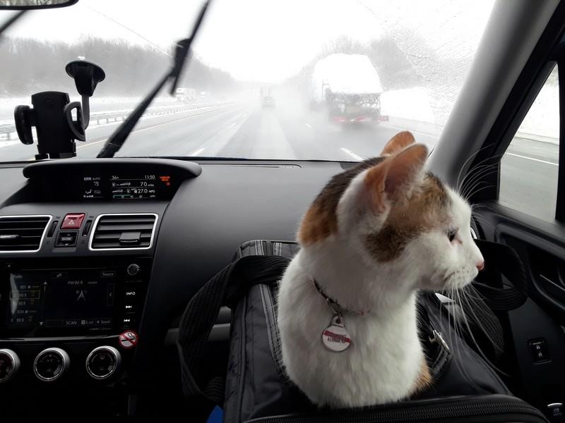 chat sous une tempête de neige