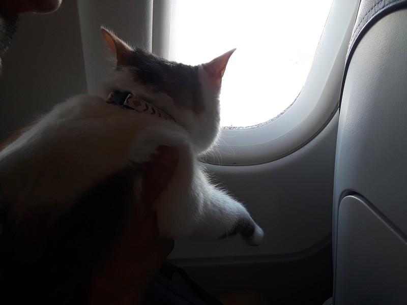 chat dans un avion hublot